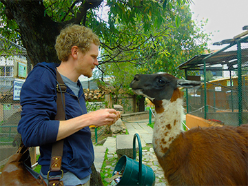 Volunteer work in Care of rescued animals cusco peru wiracocha spanish school